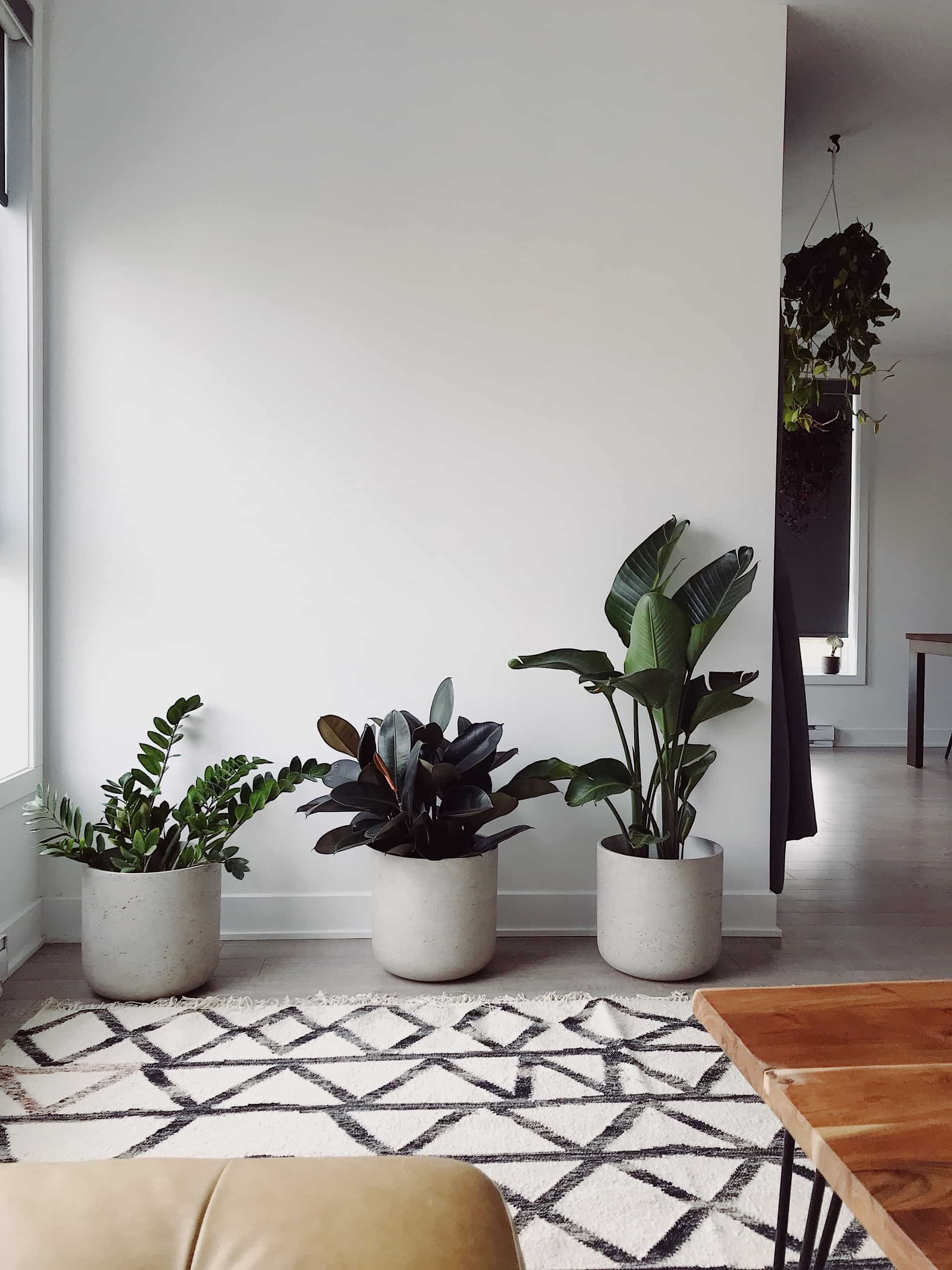 Why Are Indoor Plants Important For a Healthy House?